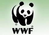 WWF собирает подписи для защиты морей от загрязнений нефтепродуктами