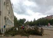 Возле Темрюкской районной Администрации спилили голубые ели