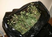 Задержан темрючанин, перевозивший 3,5 килограмма маковой соломы