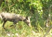 Неподалеку от поселка Сенной охотник подстрелил неизвестное животное