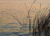 В Курчанском лимане Темрюкского района утонул рыбак