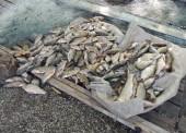 Конфискованная рыба. Фото ОМВД по Темрюкскому району