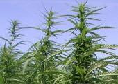 """Наркотики в """"особо крупном размере"""" обнаружили в одном из домов поселка Сенной"""