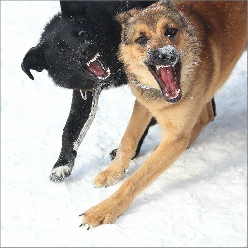 Снятся собаки стая