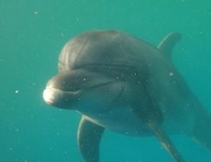 Дельфин Дельфа. Фото vk.com/ponticus_dolphin_protection