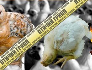 Карантин. Птичий грипп