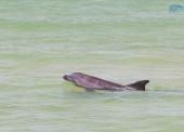 В районе строительства моста в Крым зафиксировали увеличение количества дельфинов