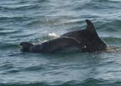 ФСБ пресекла деятельность группы незаконно отлавливающей дельфинов
