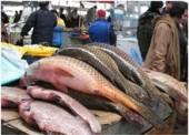 Более 120 килограмм рыбы изъяли в ходе проверки на рынке в Темрюке
