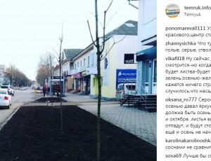 На улице Ленина вместо кленов могут снова высадить хвойные деревья