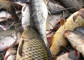 Азовскому морю предрекают сокращение рыбных запасов