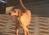 Просим помощи в поиске собаки