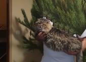 Пропал лучший в мире кот