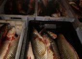 Лодку и 460 килограммов рыбы изъяли у рыбаков в районе поселка Кучугуры