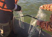 Более 3 километров браконьерских сетей вытащили из водоемов Темрюкские пограничники