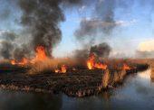 Особый противопожарный режим ввели в Темрюкском районе