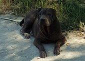 Кто собаку потерял? Пёс ждёт и надеется...