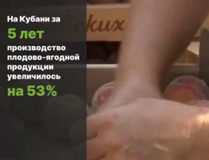 На Кубани производство плодово-ягодной продукции увеличилось на 53%.