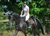 ООО «Наездник» - прокат лошадей